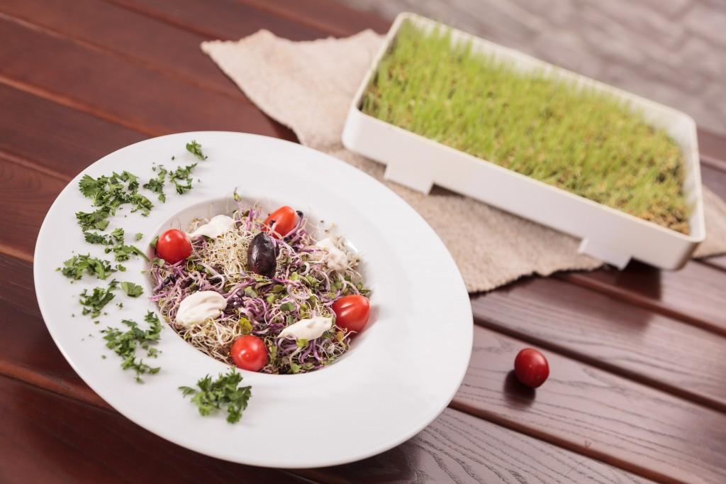 03 Salata Vita Rama